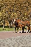 Two horses  in autumn. Two horses in autumn park Royalty Free Stock Photo