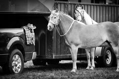 Two Horses Awaiting Competition - Black and White Stock Images