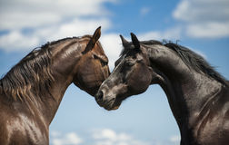 Two horses on a background of sky Royalty Free Stock Photos