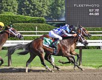 Fantastic Finishes at Saratoga royalty free stock photography