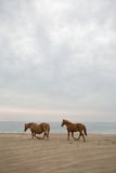Two horses on the beach Stock Photos