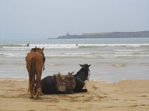 Two horses on the beach Royalty Free Stock Photos
