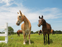 Two horses, big and small Royalty Free Stock Photos