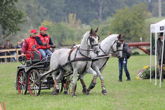 Two horses carriage Royalty Free Stock Images