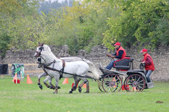 Two horses carriage Stock Image