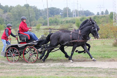 Two horses carriage Royalty Free Stock Image