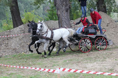 Two horses carriage Royalty Free Stock Photos