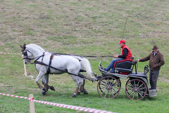 Two horses carriage Royalty Free Stock Photography