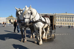 Two horses and a carriage. Royalty Free Stock Photo
