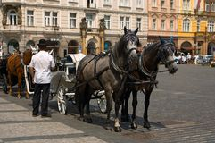 Two horses and the carrier Royalty Free Stock Photo