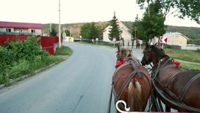 Two horses in a cart with the eyes of a groom stock video footage