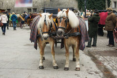 Two horses. In the city for tourists Stock Image