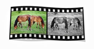 Two horses colours Stock Images