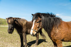 Two horses on farm Royalty Free Stock Image