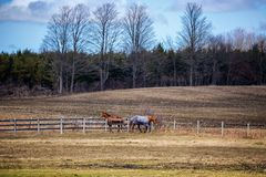 Two horses at a farm on either side of a fence royalty free stock image