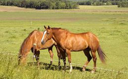 Two horses feeding Stock Images