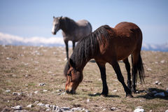 Two horses in the field Royalty Free Stock Photo