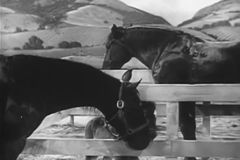 Two horses and foal in horse corral stock footage