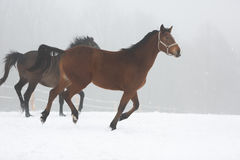 Two horses in fog Royalty Free Stock Photography