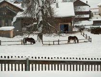 Two horses in front of a farmhouse in winter Royalty Free Stock Image