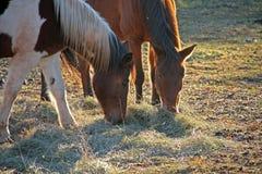 Two horses gazing Royalty Free Stock Photos