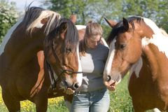 Two horses and a girl. Girl and two horses friendship and empathy stock photos
