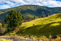 Two horses on the grassy slope behind the fence. Beautiful rural scenery on fine weather autumn day Stock Photography