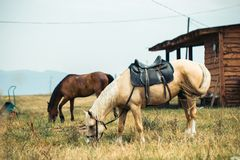 two horses on ranch royalty free stock photo