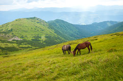 Two horses is grazed against mountains in the summer. Stock Photo