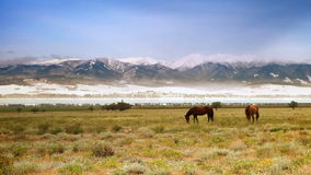 Two horses grazing on the field in front of the snow-covered mountains. 