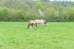 Rural scene with two horses royalty free stock photography