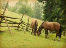 Two horses grazing in meadow Stock Photo