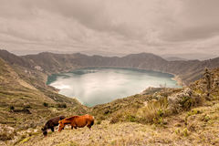 Two Horses Grazing Near Quilotoa Lagoon Royalty Free Stock Images