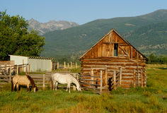 Two Horses Grazing next to Colorful Little Barn Stock Images