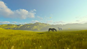 Two horses on green meadow, beautiful morning. Hd video stock footage