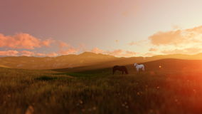 Two horses on green meadow, beautiful sunrise. Hd video stock video