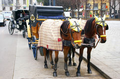 Two horses harnessed to the carriage Stock Image