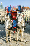 Two horses harnessed to the carriage Stock Photo
