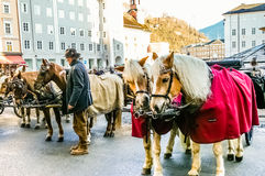 Two horses harnessed to the carriage Stock Photography