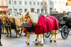 Two horses harnessed to the carriage Royalty Free Stock Photography