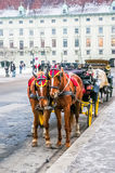 Two horses harnessed to the carriage Stock Photos