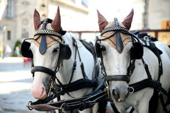 Two Horses - Are Harnessed To A Cart For Driving Tourists. In Austria Royalty Free Stock Images