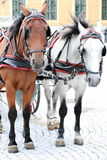 Two horses harnessed to the cart Royalty Free Stock Photography