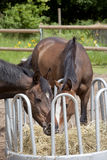 Two horses on hay rack Royalty Free Stock Images