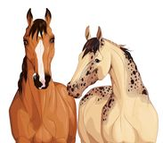 Horses-companions. Two horses are interested in what is happening Stock Photography