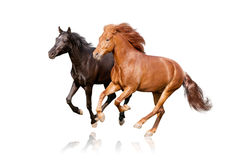 Two horses isolated Royalty Free Stock Photography