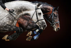 Two horses in jumping show, on brown background Stock Photo