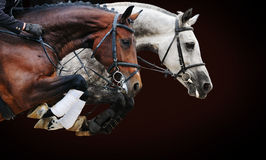 Two horses in jumping show, on brown background Royalty Free Stock Images