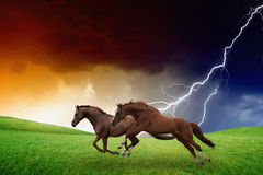 Two horses, lightning storm Stock Photos