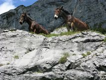 Two horses looking over an outcrop in Switzerland Stock Images
